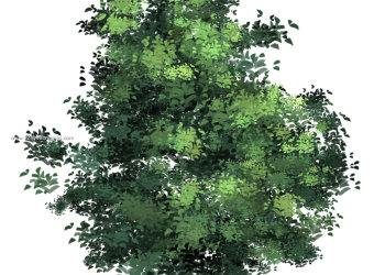 Adobe Tree