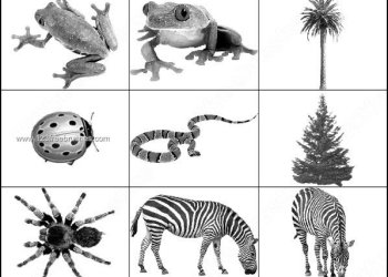 Animal Brushes – Free Snake – Zebra – Frog Photoshop Brushes