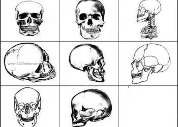 Skull Brushes Free