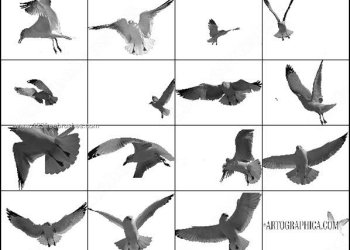 Free Flying Birds Brushes