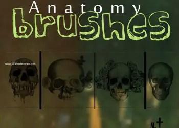 Skulls Anatomy