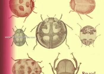 Round Japanese Beetles