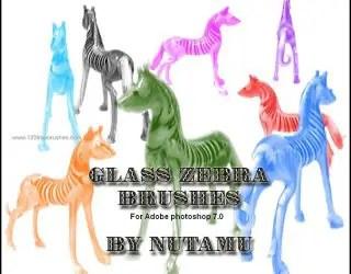 Glass Zebra