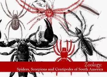 Spiders – Scorpions – Centipedes