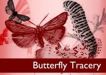 Painterly Butterflies