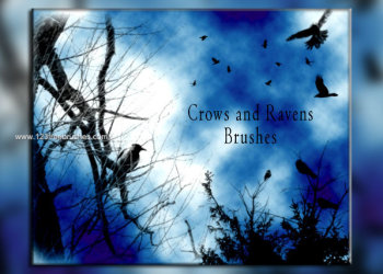 Crows and Ravens Brushes Free Download