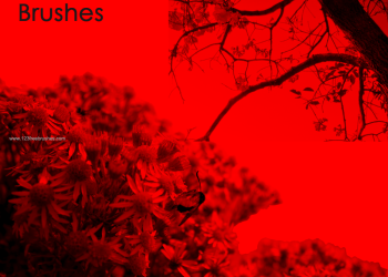 Floral Photoshop Brushes Free