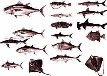 Fish Photoshop Brushes Free Download
