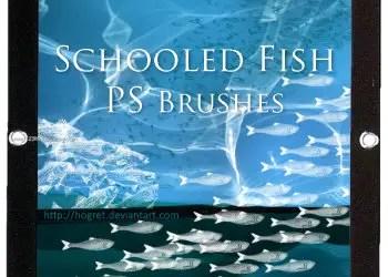 Schooled Fish