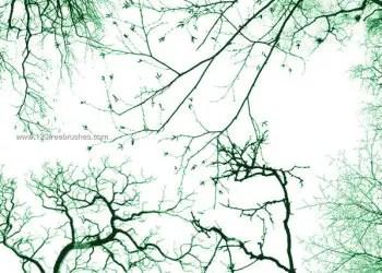 Tree Photoshop Brushes Free