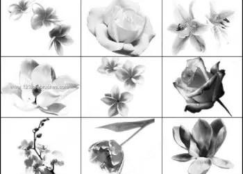 Free Photoshop Rose Brushes