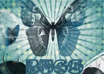 Bug – Butterfly – Ladybird