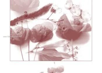 Floral Brushes Mega Set