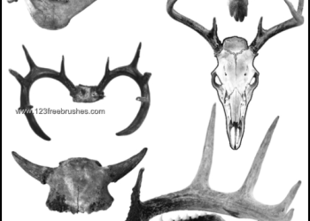 Animal Skulls and Horns