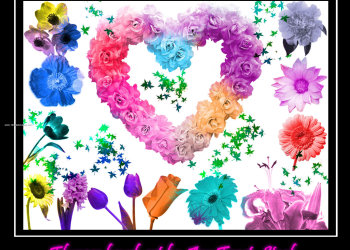 Flower Brushes Photoshop 7 Free Download