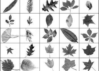 Free Leaves Brush Pack