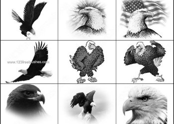 Eagle Free Photoshop Brushes