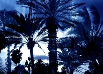 Palm Tree Brushes Photoshop 7