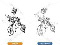 5002010-sketchy-plants-vector-and-photoshop-brush-pack-03_p013