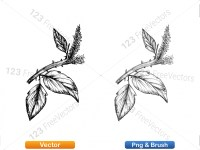 5002011-sketchy-plants-vector-and-photoshop-brush-pack-04_p002