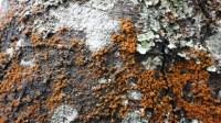 5051002-algae-texture-on-tree-bark-01_p001