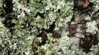 5051002-algae-texture-on-tree-bark-01_p006