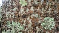 5051002-algae-texture-on-tree-bark-01_p008
