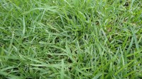 5051003-green-grass-texture-pack-01_p003