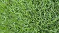 5051003-green-grass-texture-pack-01_p007