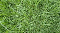 5051003-green-grass-texture-pack-01_p011
