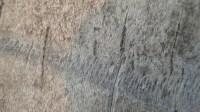 5051007-tree-bark-texture-01_p002