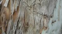 5051007-tree-bark-texture-01_p012