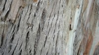 5051007-tree-bark-texture-01_p013