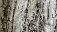 5051007-tree-bark-texture-01_p014