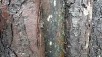 5051008-wet-tree-bark-texture-01_p006