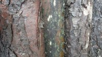 5051008-wet-tree-bark-texture-01_p006