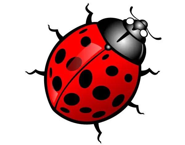 Ladybug vector image 123freevectors ladybug vector image stopboris Image collections