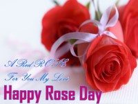 rose pic for rose day