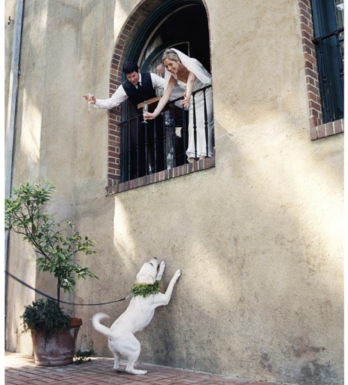 Cute wedding dogs