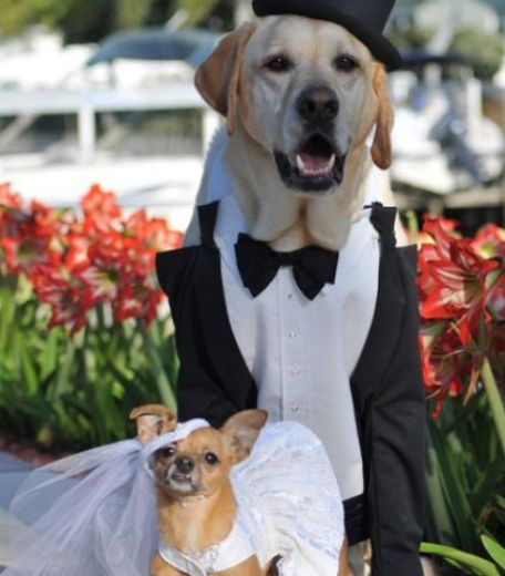 groom dog in wedding