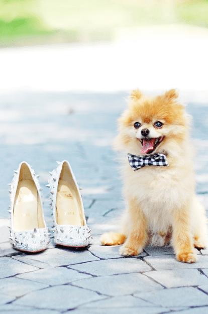wedding guest dogs-123WeddingCards