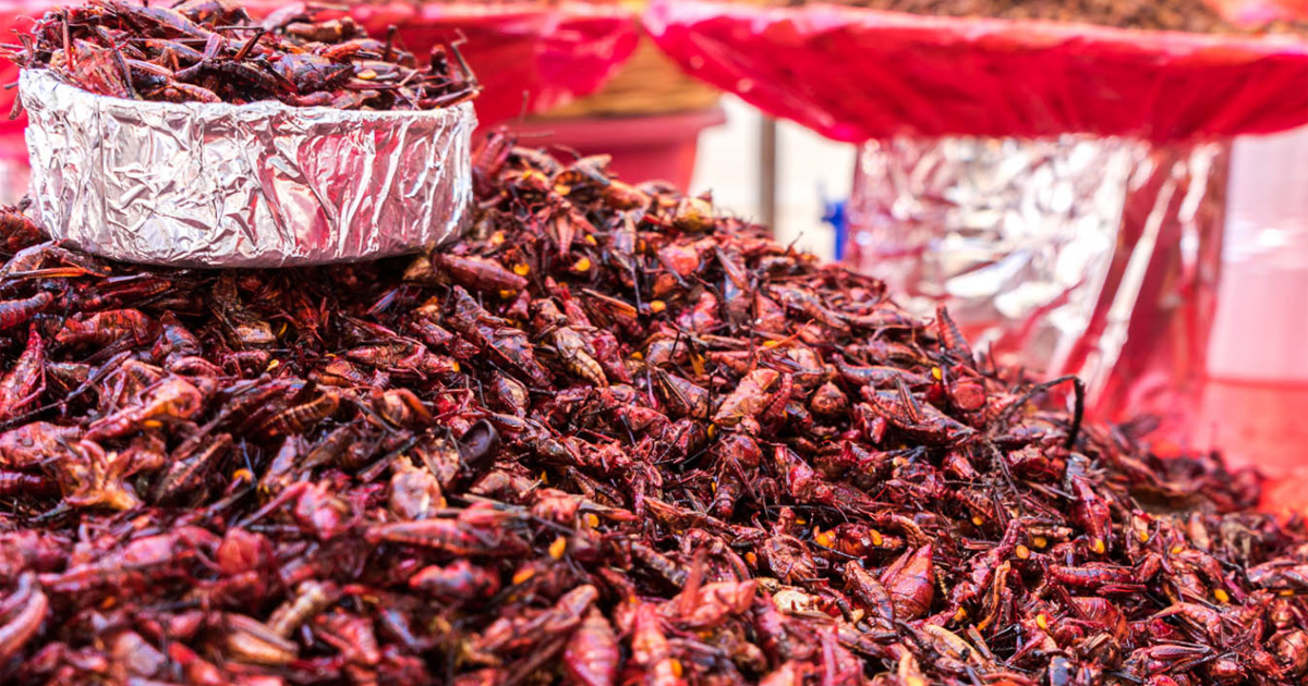 cockroaches as dry chilies