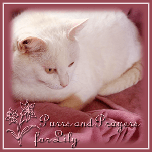Purrs+and+Prayers+for+Lily