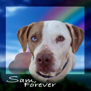 Sam, Forever
