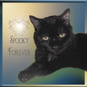 Spooky FOREVER