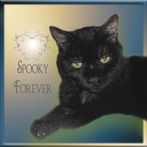 Spooky FOREVER