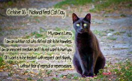 National-Feral-Cat3