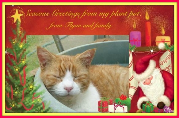 flynn-christmas-card-2016