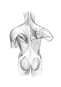 Back pain is caused by the interconnected muscles that move the back in unlimited directions