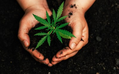 Is CBD a placebo or real science?
